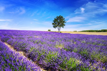 Provence Special